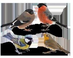 reconnaitre les oiseaux du jardin collection design inspiration pour le jardin. Black Bedroom Furniture Sets. Home Design Ideas