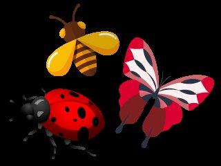 Espèces d'insectes